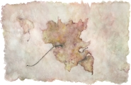 <h5>Rose Maple</h5><p>Watercolor</p>