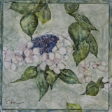 "<h5>Lace cap</h5><p>Watercolor on yupo (Mounted on cradled board)  8""x8""</p>"