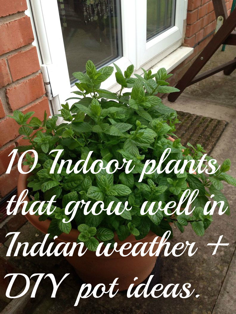 10 Indoor plants that grow well in Indian weather + DIY pots ideas.