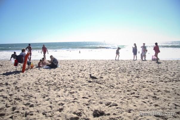 anmlhse venice beach