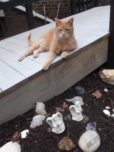Oscar The Cat 010