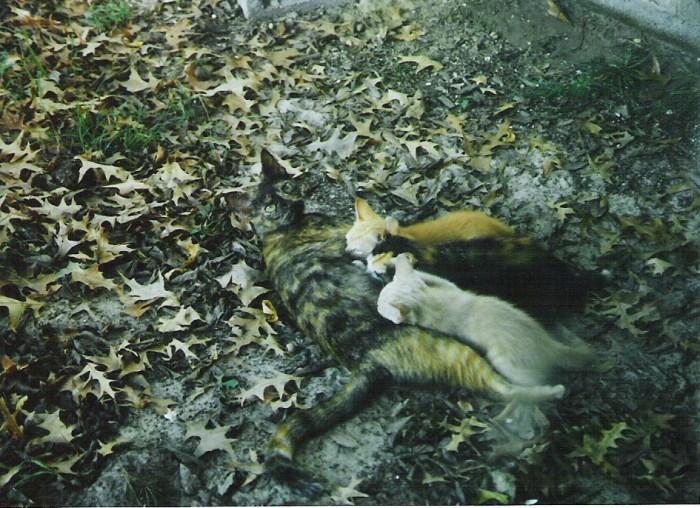 Annalisa Parent vermont Writer Cat Story