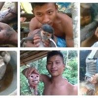 Vietnam: Soldiers Arrested for Torturing, Killing Endangered Langurs