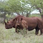 Update on U.S. Rhino Horn Trafficking Case 'Operation Crash'