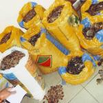 Four Pangolin Smuggling Busts in Four Countries in 10 Days