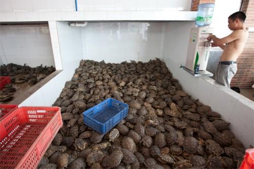 Exotic Animal Wallpaper Pangolins Lorises Turtles Ravaged By Illegal Wildlife