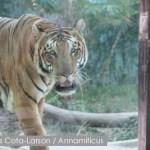 Wildlife Trade Disaster Averted in Vietnam