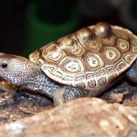 Jailed Turtle Trafficker Files for Appeal