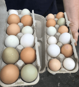 The boys found some of these eggs still warm under hens.