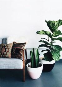 modern house plants