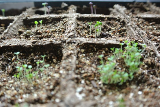 The first seeds for our summer garden are sprouting! A little joy amidst our house of pain and suffering.