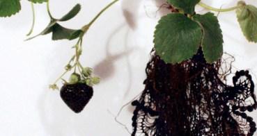 black strawberry