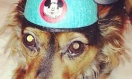 Happy Halloween Dogs of Disney!