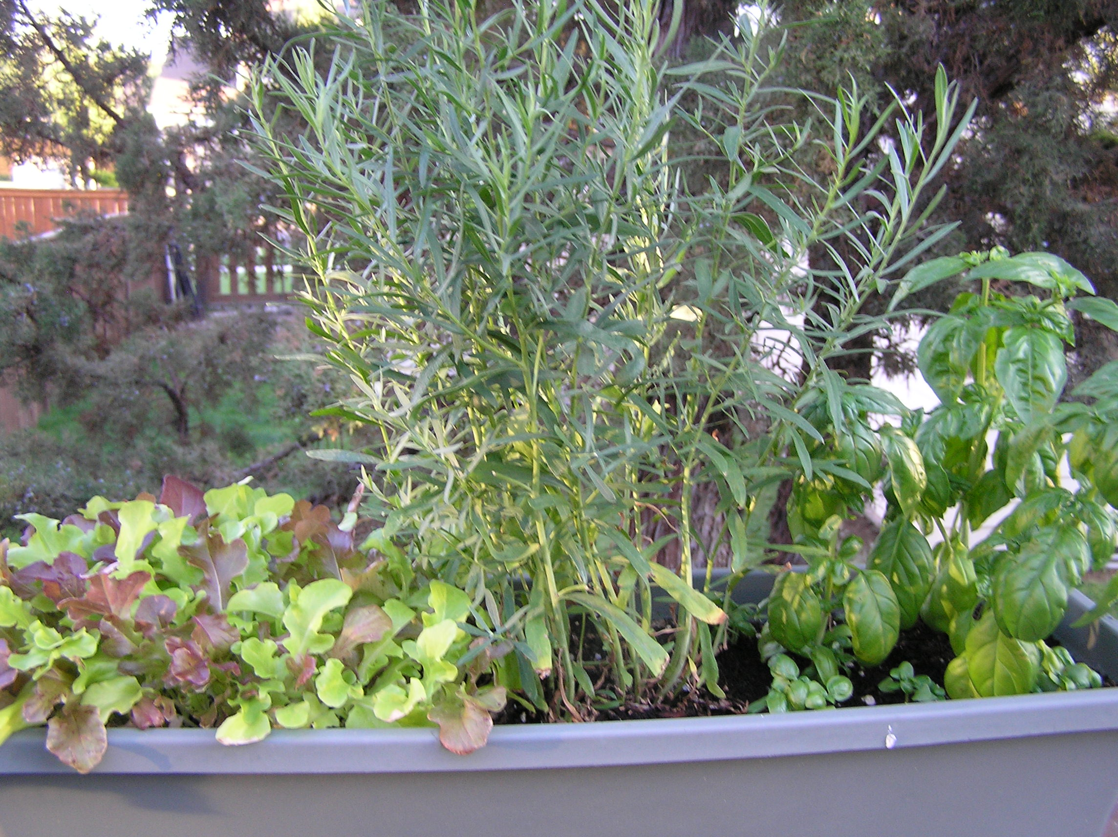 Herb Planter Pot Planter Pot Fresh Herb Garden Anotherfoodieblogger
