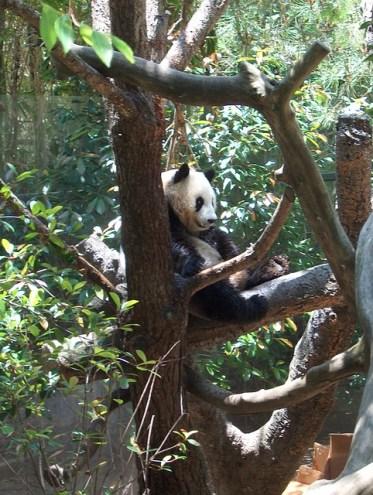 panda-709312_640