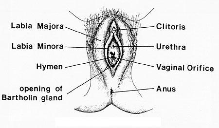 iud cervix diagram