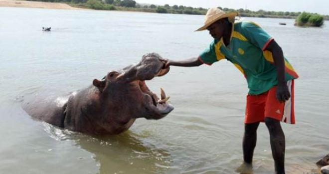 Man and Hippo