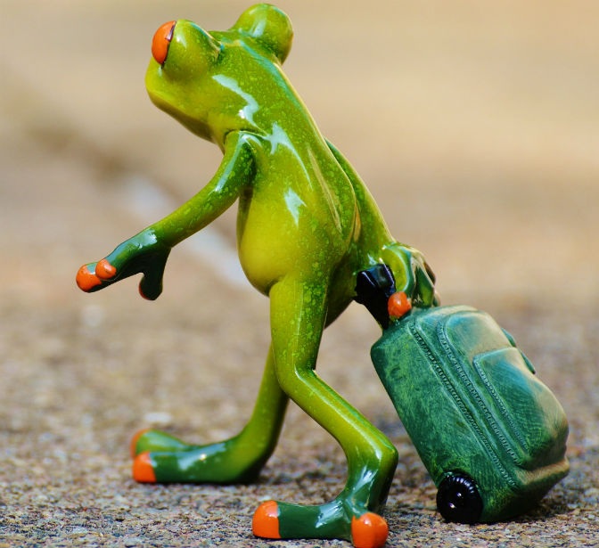 frog-farewell-travel-luggage11