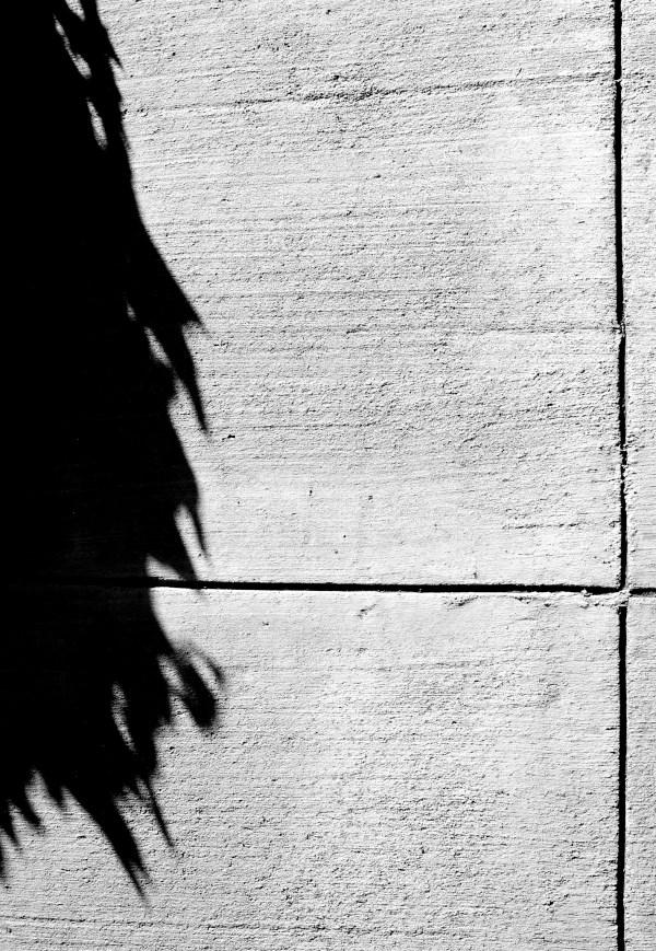 Hedera helix, ivy, shadow