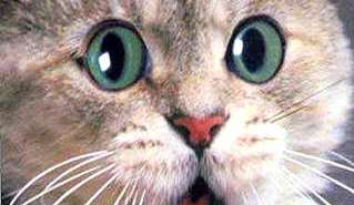 surprisecat