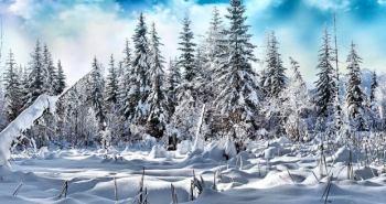evergreen-forest-under-deep-snow-wallpaper