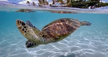 turtle-beach_2241772k