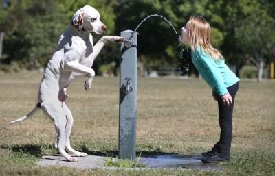 Ο σκύλος βοηθάει ένα κοριτσάκι να ξεδιψάσει