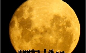full_moon_silhouettes_t