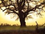 Το δέντρο των προβλημάτων