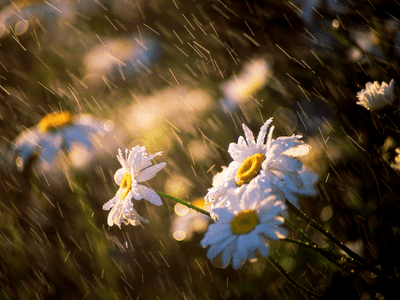 http://i0.wp.com/antikleidi.com/wp-content/uploads/2013/04/Spring-Rain-wallpaper.png