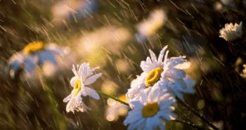 Spring Rain wallpaper
