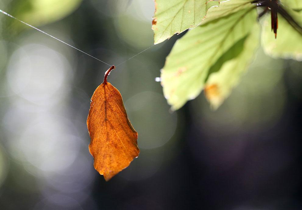Φύλλο κρέμεται από έναν ιστό αράχνης.