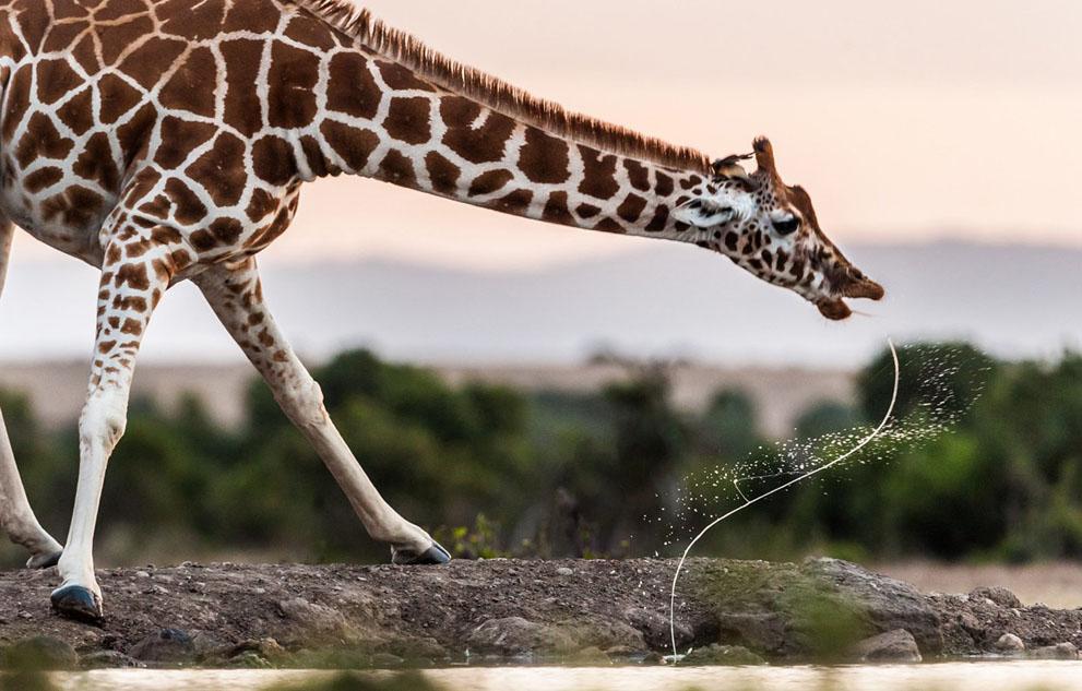 Τοποθεσία: Κένυα. (© Majed al Zaabi