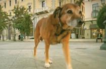Η ελληνική κρίση μέσα από τα μάτια ενός σκύλου!