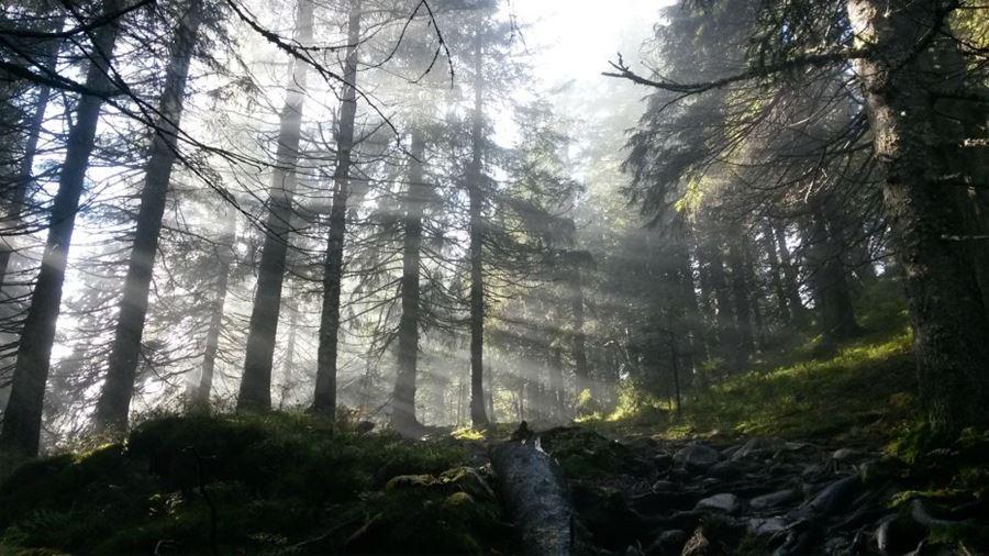 δάσος στη Νορβηγία