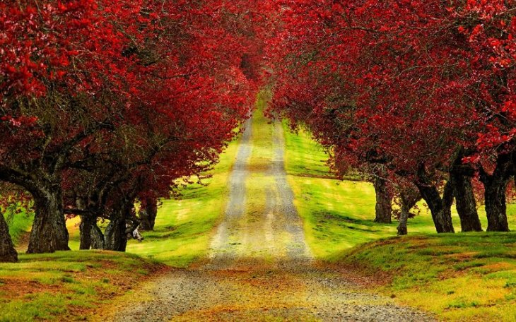 colorful-fall-photos-autumn-road