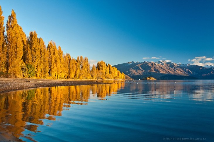New Zealand Photos | golden poplar reflections, Lake Wanaka, NZ