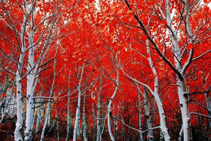 colorful-fall-photos-red-and-white