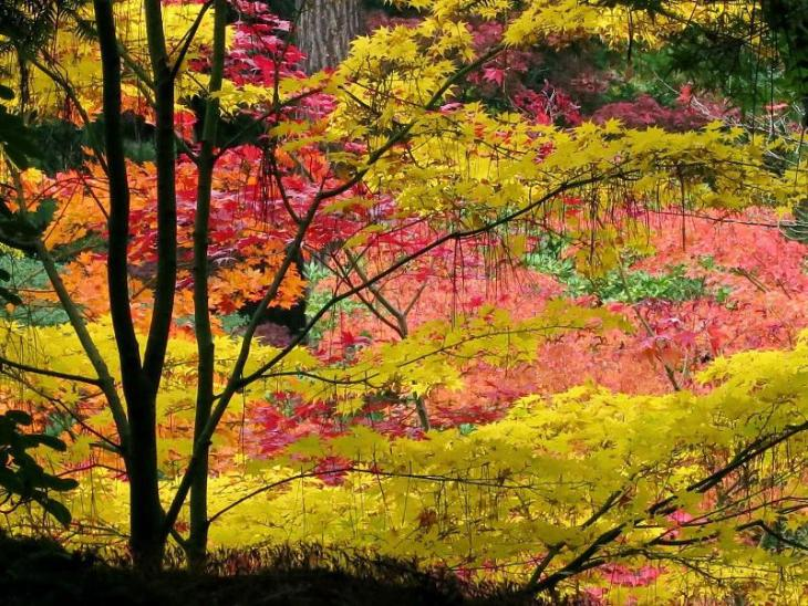colorful-fall-photos-seattle-japanese-garden