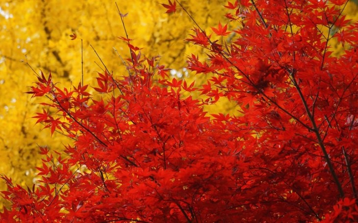 colorful-fall-photos-vibrant-leaves
