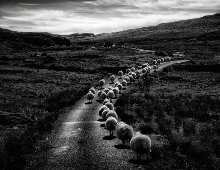 sheep-herds-around-the-world-2