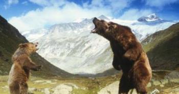 the-bear-2-1