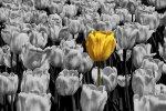 Σοπενχάουερ – Oδηγίες ζωής για τους ανθρώπους με εσωτερικό πλούτο