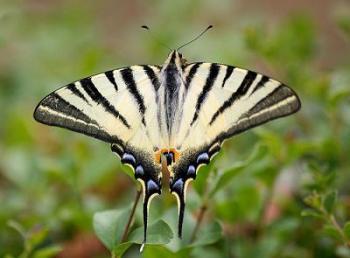 petalouda-symmetry