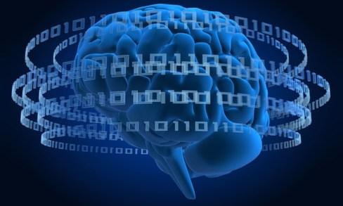 500-brain