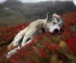 Πως ένα είδος ζώου μπορεί να επηρεάσει το περιβάλλον