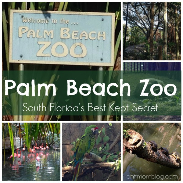 Palm Beach Zoo: South Florida's Hidden Gem