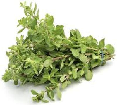 (l'origan ) نبات البردقوش - فوائد البردقوش أو المرددوش: شاي لذيذ و منافع كثيرة