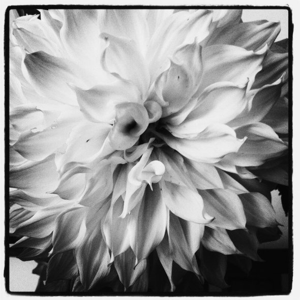 White Dahlia An Unrefined Vegan