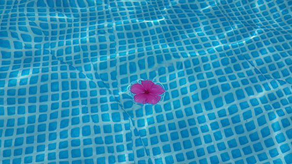 プールに浮かぶ花びら